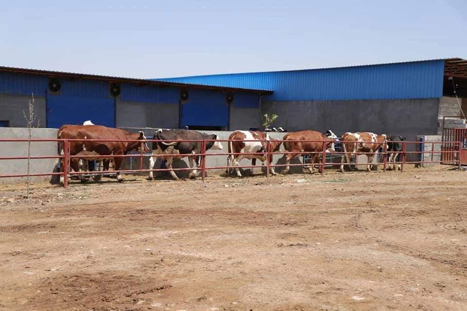 ههڵهبجه:شیر و ماست ههناردهی تهواوی پارێزگاكانی كوردستان دهكات