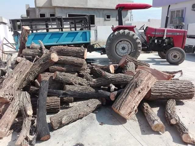 لە سنوری سەیدصادق بە تۆمەتی بڕینی داری سرووشتی